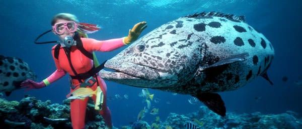 great barrier reef scuba diving snorkeling